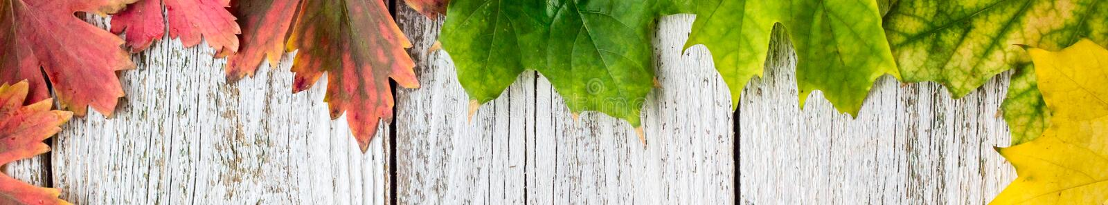 Banner of Seasonal frame of autumnal maple leaves with gradient color on white wooden background royalty free stock photo