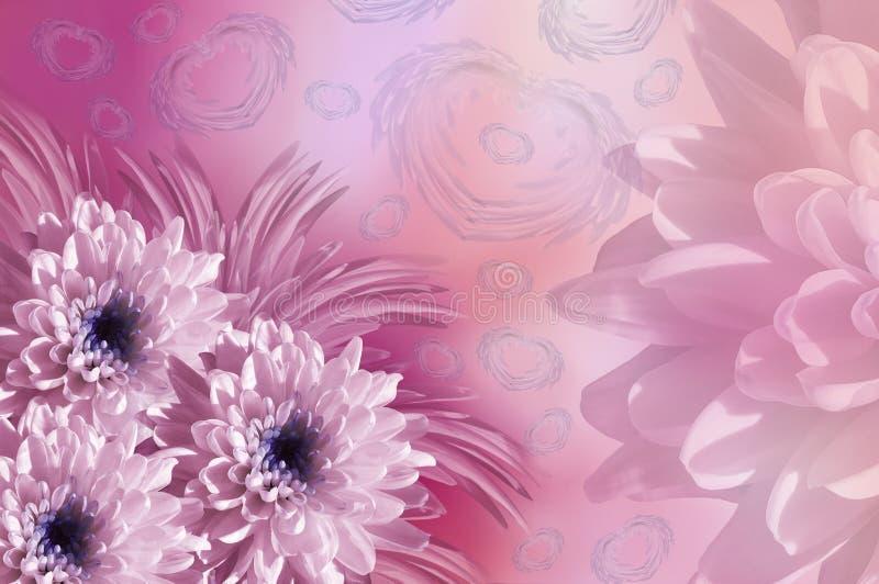 banner tła kwiaty form różowego spiralę trochę Kwiat menchii chryzantemy kwiecisty kolaż Kwitnie skład ilustracja wektor