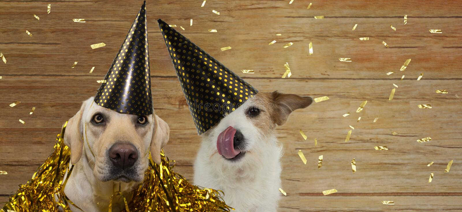 BANNER TWO HAPPY DOGS CELEBRATING BIRTHDAY, NEW YEAR OR ANNIVERSARY PARTY  AGAINST WOODEN BACKGROUND WITH GOLDEN CONFETTI FALLING. BANNER TWO HAPPY DOGS stock photo