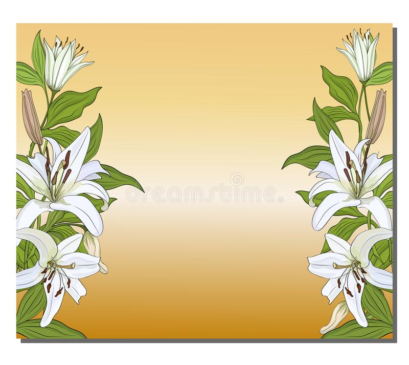 Banner with a vertical border of white lilies on a gold background. Vector royalty free illustration