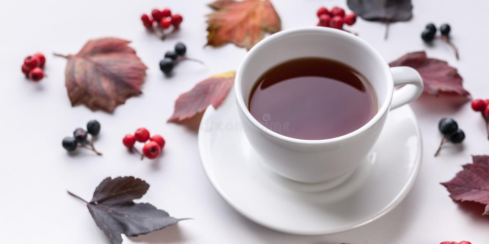 Banner: White Tea Mug, Leaves and berries. Autumn composition. Red foliage, ceramic teacup and small fruits on white background. Fallen leaf and rowanbery stock photos