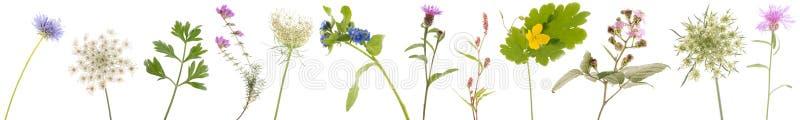 Banner wild flowers vector illustration