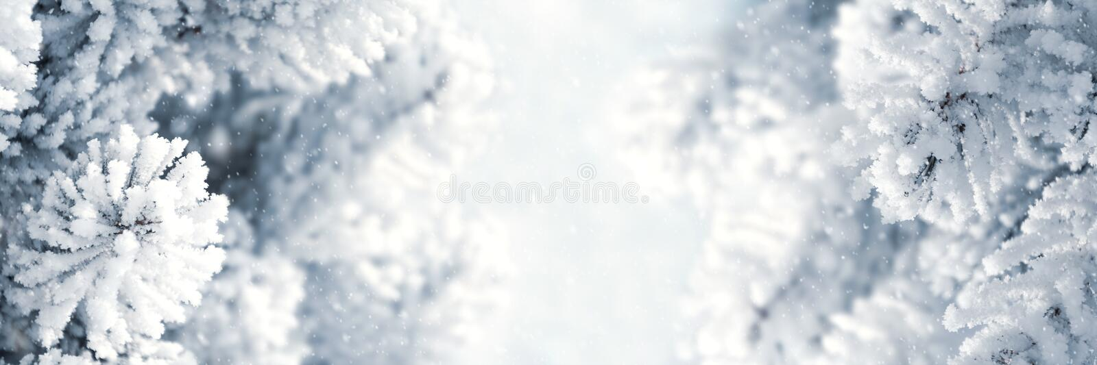 Banner 3:1. Winter Christmas scenic background. Snow landscape with spruce branches covered with snow. Sky and sunlight through royalty free stock image