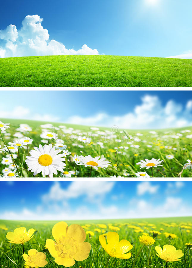 Banners van de lentebloemen en gras stock afbeeldingen