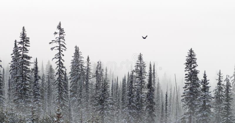 Bannière d'arbres d'hiver images stock