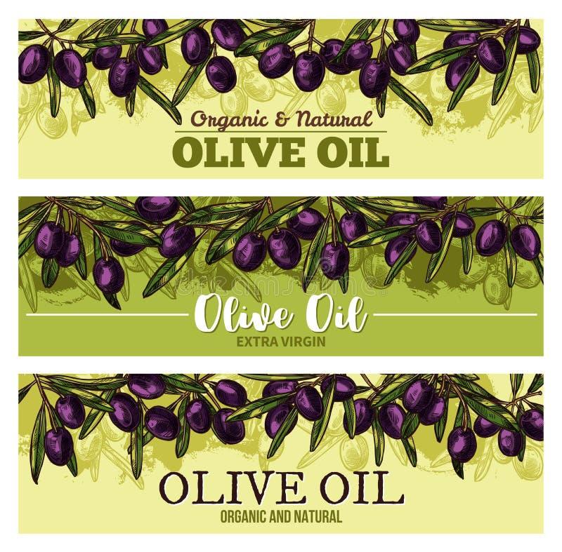 Bannière d'huile d'olive avec la frontière du fruit noir, feuille illustration de vecteur