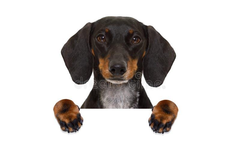 Bannière de chien de saucisse de teckel photos stock