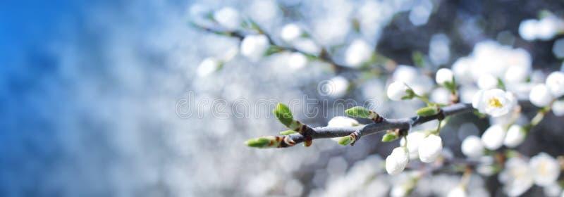 Bannière de fleur image stock