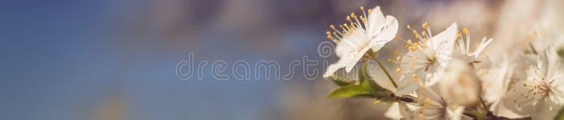 Bannière de fleur de ressort images libres de droits
