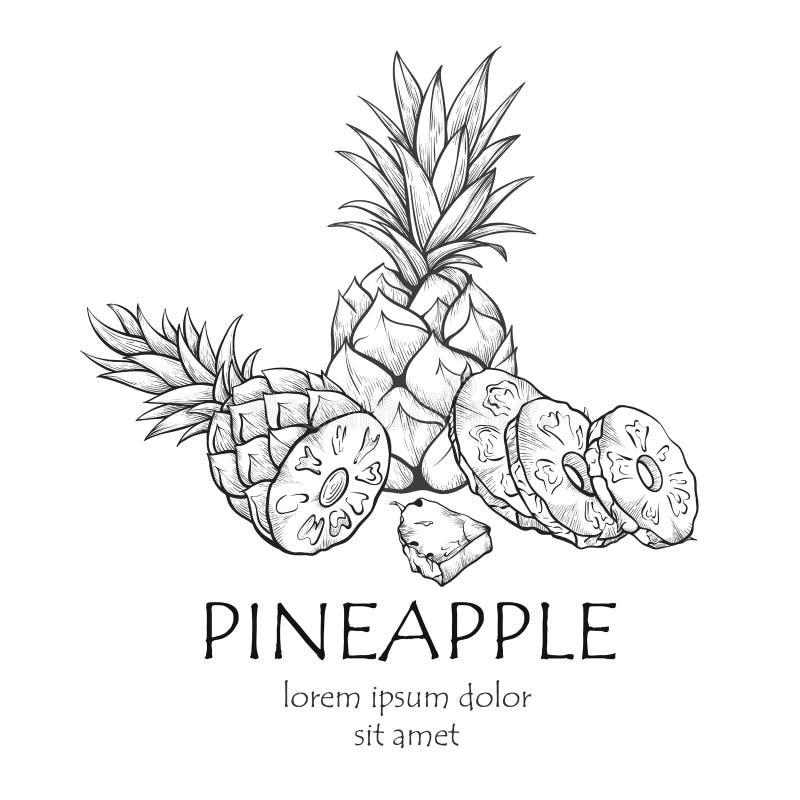 Bannière de fruit d'ananas, croquis avec l'espace de copie illustration de vecteur