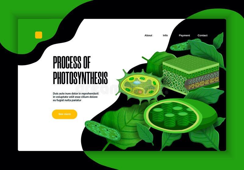 Bannière de site Web de concept de photosynthèse illustration libre de droits