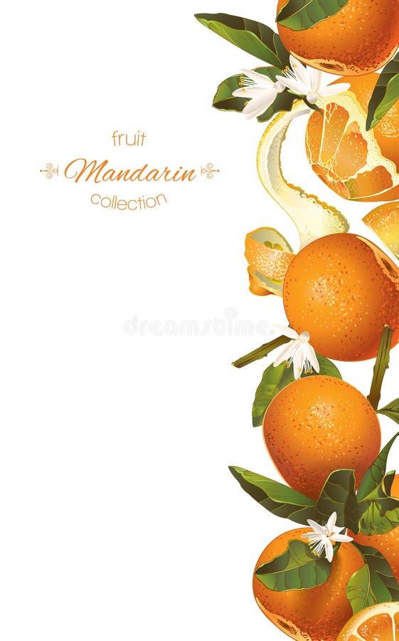 Bannière de verticale de mandarine illustration stock
