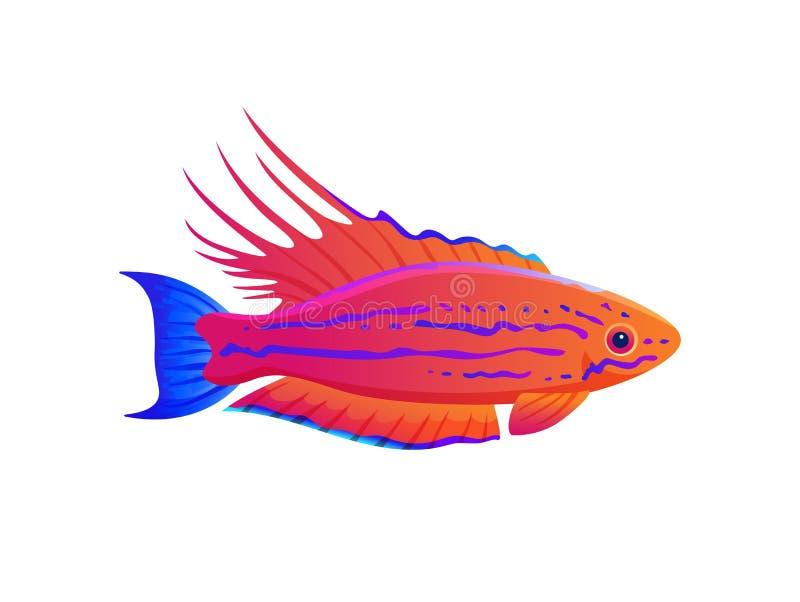 Bannière exotique de poissons d'océan de Wrasse de clignoteur de Filamented illustration libre de droits