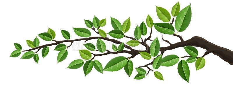 Bannière horizontale avec la branche d'arbre d'isolement avec les feuilles vertes illustration libre de droits