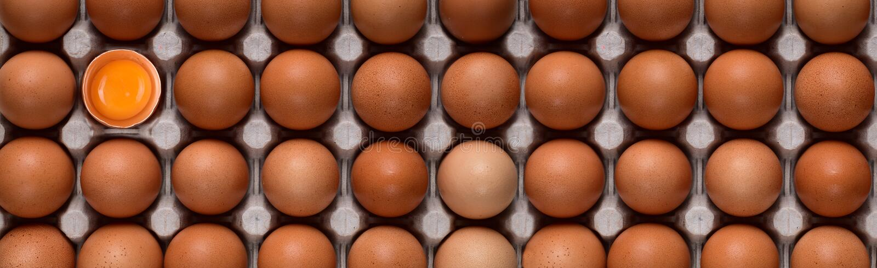 Bannière horizontale avec même des rangées des oeufs bruns de poulet et d'un jaune lumineux dans le coin gauche supérieur photo libre de droits