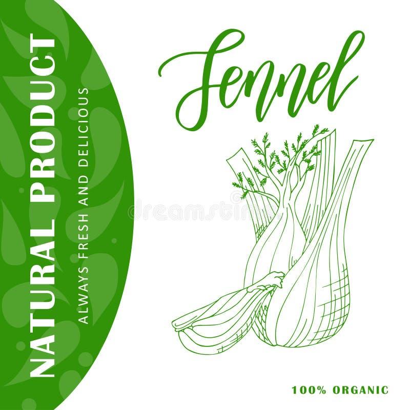 Bannière végétale de nourriture Croquis de fenouil Affiche d'aliment biologique Illustration de vecteur illustration stock