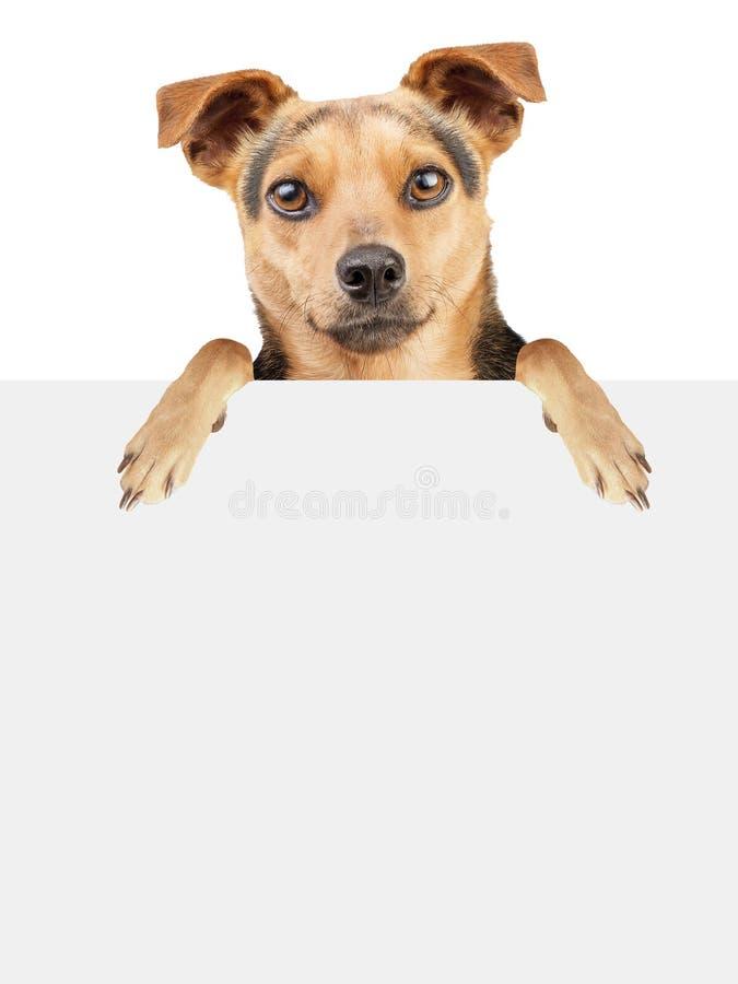 Bannière vide de chien d'isolement photo stock