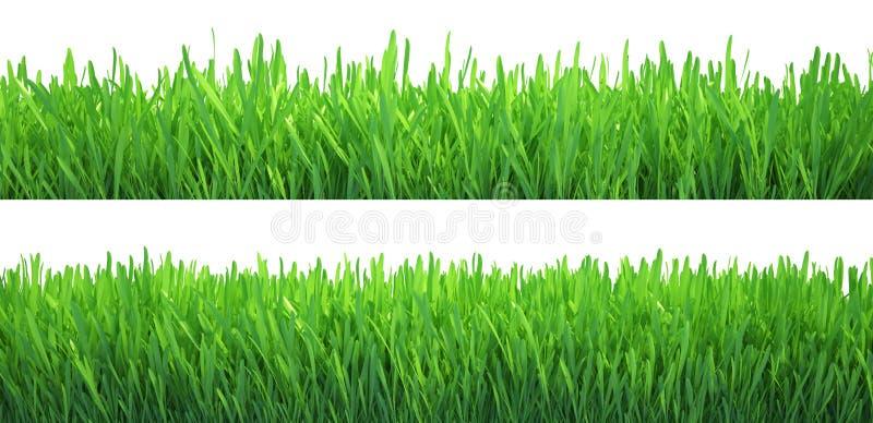 Bannières d'herbe verte réglées Fond de nature Pré Ressort, saison d'été Rendu de la croissance de plantes 3d illustration de vecteur
