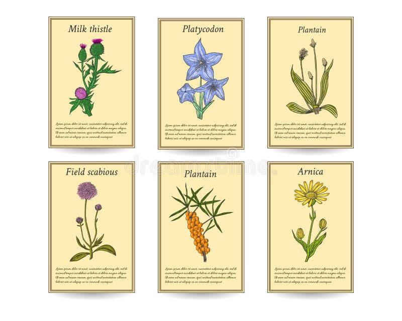 Bannières tirées par la main d'étiquette de vente d'herbes curatives photos stock