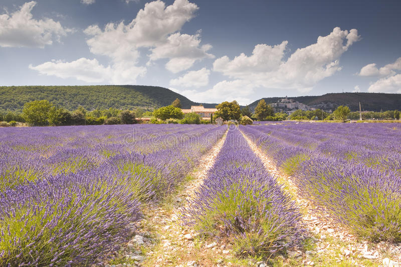 Banon lavender royalty free stock photography