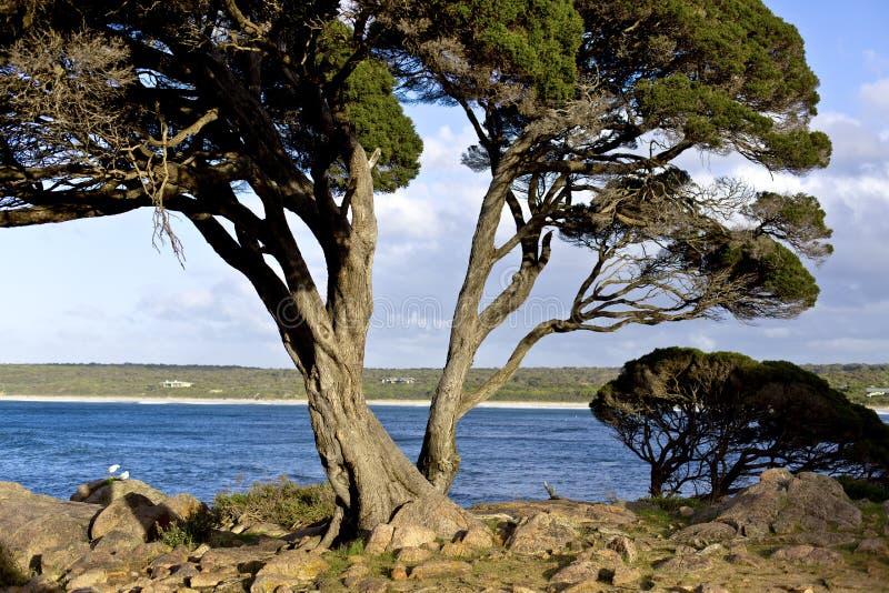 Banqueiro Bay de Naturaliste do cabo imagem de stock royalty free