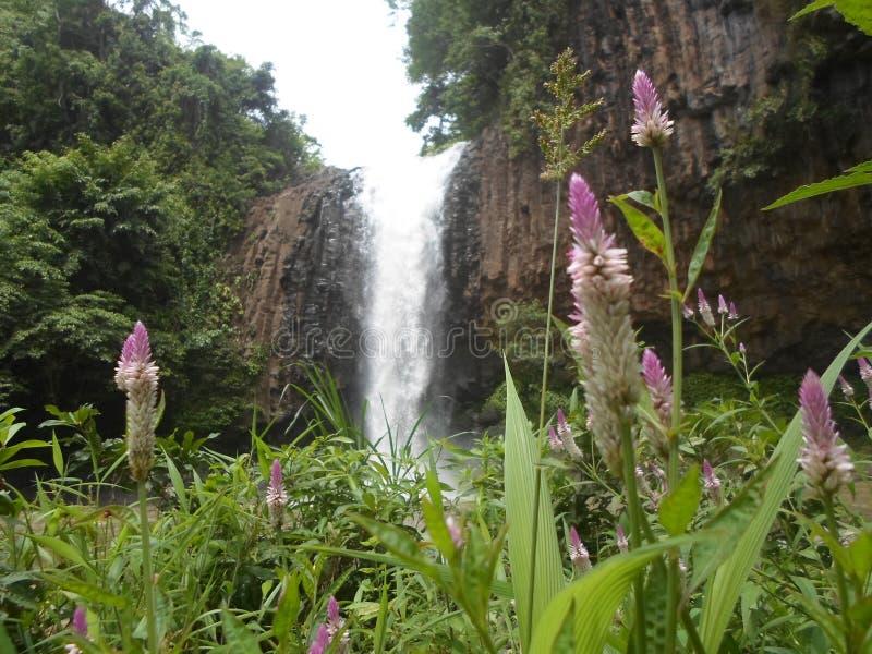 Bantimurung瀑布 库存图片