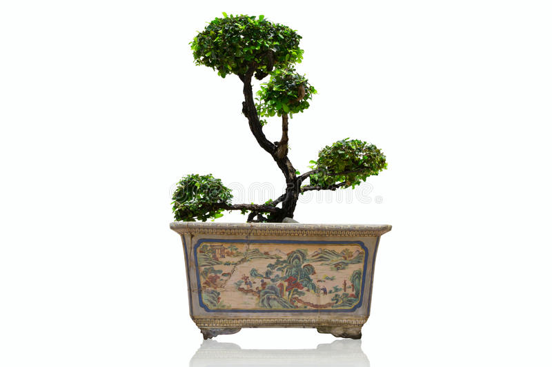 Download Banyan in pot antique stock photo. Image of ceramic, earthenware - 16473340