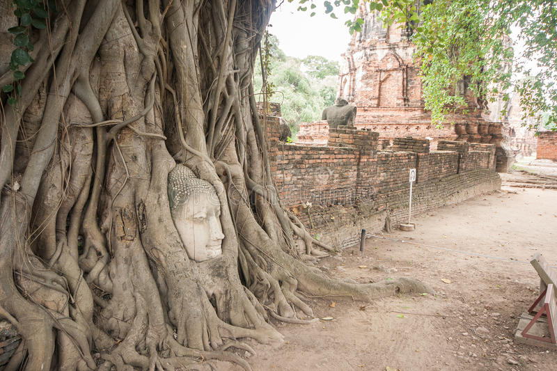 Banyan roots covering the buddha head. stock photos
