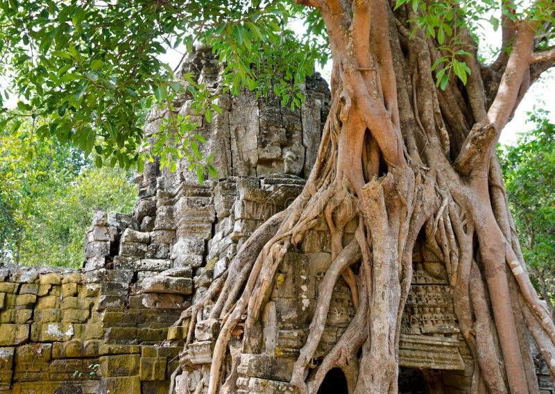 Banyan som rotar i Angkor arkivbild