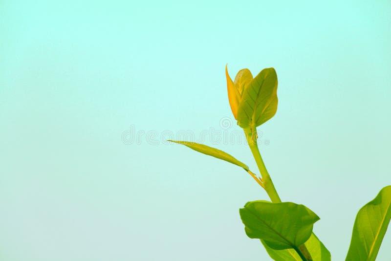 Banyan tree green stem upholding head stock images