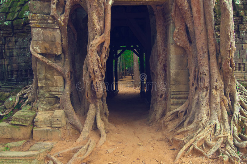 Download Banyan Tree Over The Door From Ta Som. Angkor Wat Stock Photo - Image: 8516330