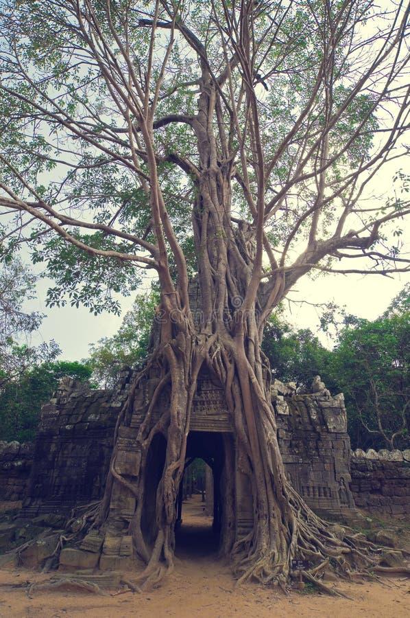 Free Banyan Tree Over The Door From Ta Som. Angkor Wat Stock Photo - 8515750