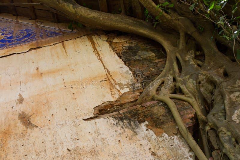 Banyantegelstenvägg arkivfoton