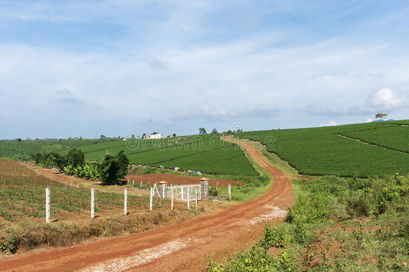 Bao Loc town, Da Lat city, Lam province, Vietnam. Bao Loc tea hill, Bao Loc town, Da Lat city, Lam province, Vietnam. With its year-round cool weather, Da Lat royalty free stock images