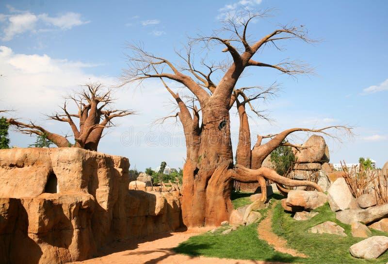 Download Baobab imagem de stock. Imagem de curso, arid, turista - 10061143