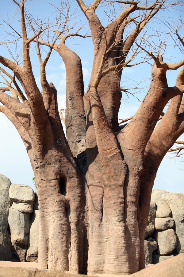 Download Baobab imagem de stock. Imagem de botswana, kalahari - 10061245