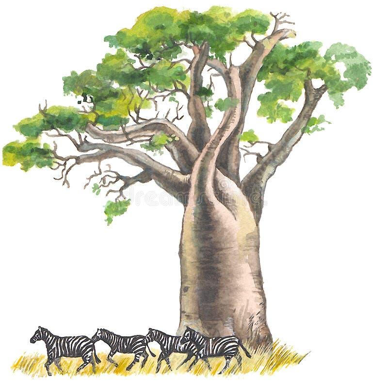 Baobab royalty illustrazione gratis