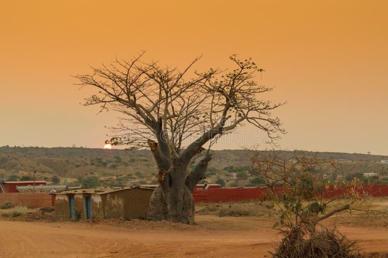 Baobab africano con il tramonto l'angola Sumbe immagine stock libera da diritti