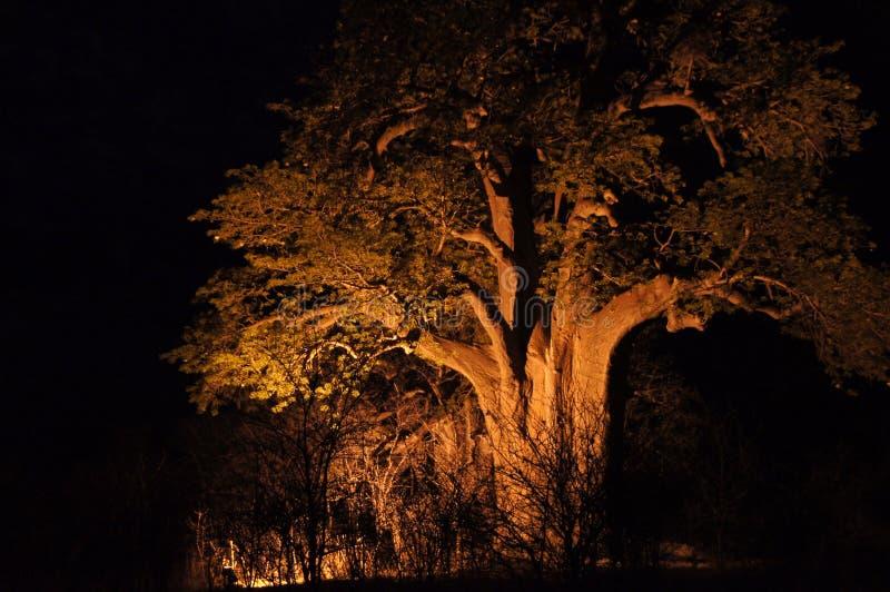 Baobab, Namibia, África fotos de archivo libres de regalías