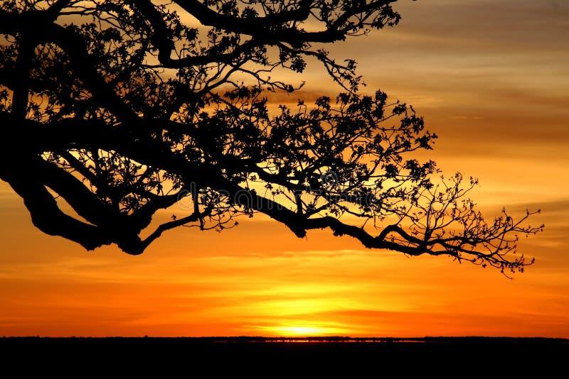 Baobab tree, Kimberly, Australia royalty free stock photo