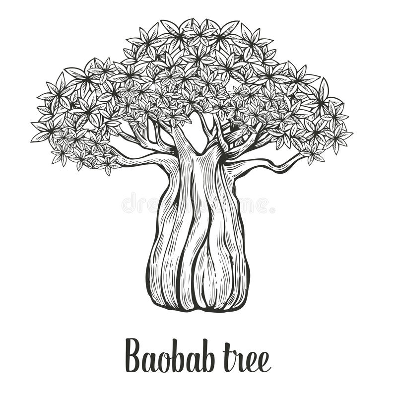 baobab tree leaf engraving vintage hand drawn sketch vector illustration black on white. Black Bedroom Furniture Sets. Home Design Ideas