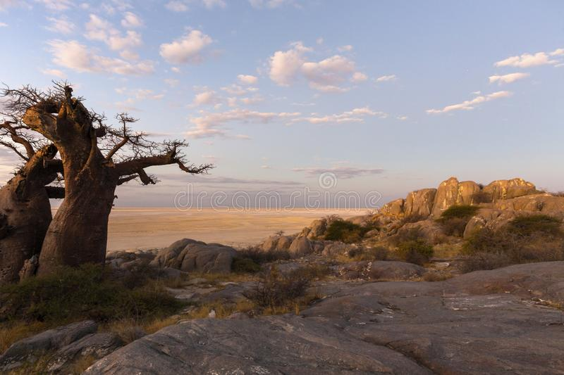 Baobab tree and rocks at late afternoon light royalty free stock photo