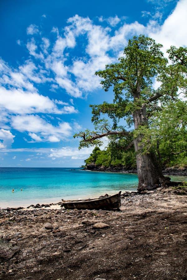 Baobabboom door het eiland blauwe lagune van Sao Tomé stock fotografie