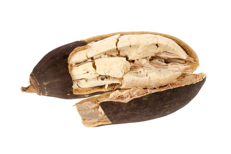 Baobabfruit stock fotografie