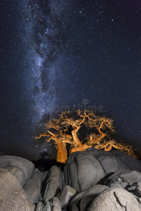 Free Baobabs, Rocks And The Milkyway Royalty Free Stock Image - 86537376