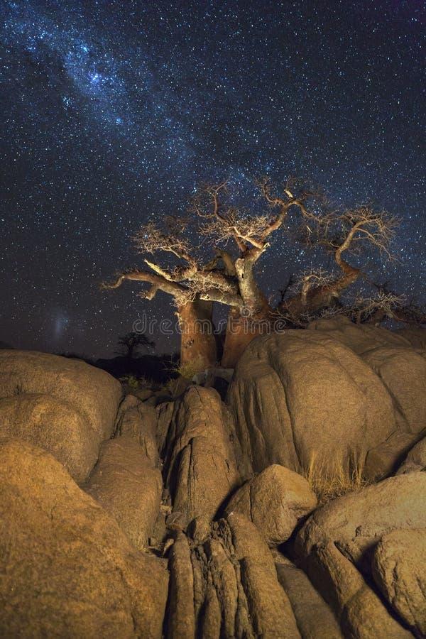 Baobabträd och vaggar under det milkyway arkivfoton
