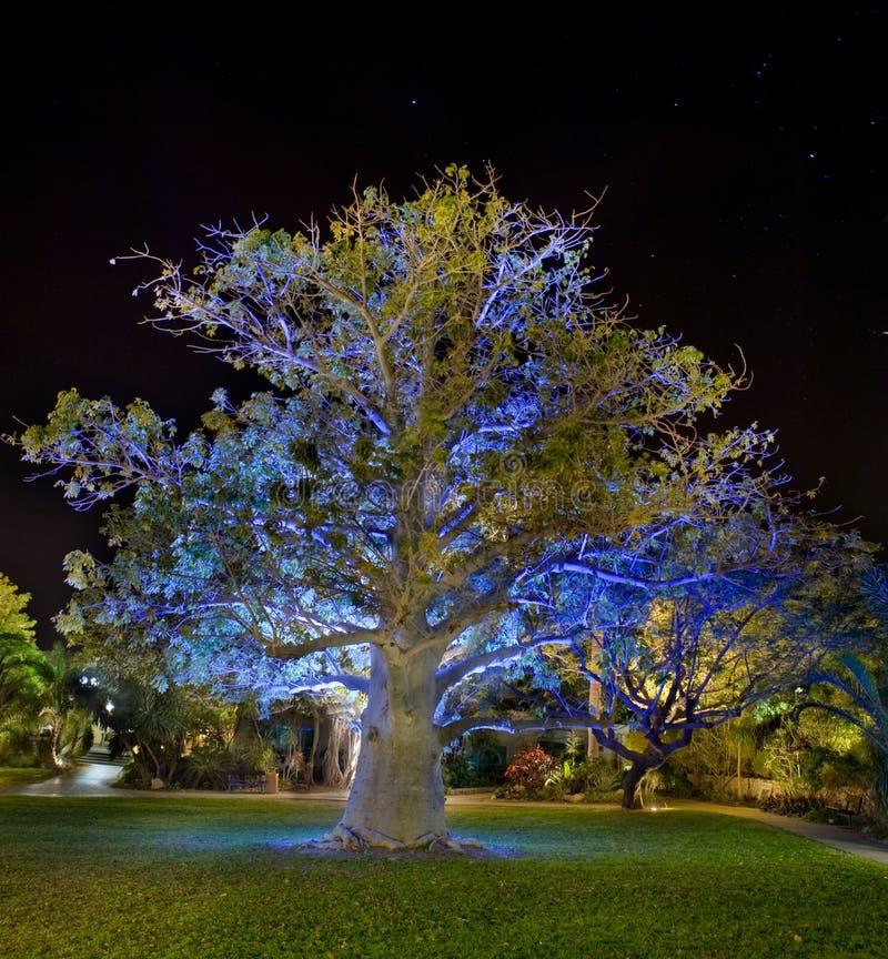 baobabu noc drzewo obrazy stock