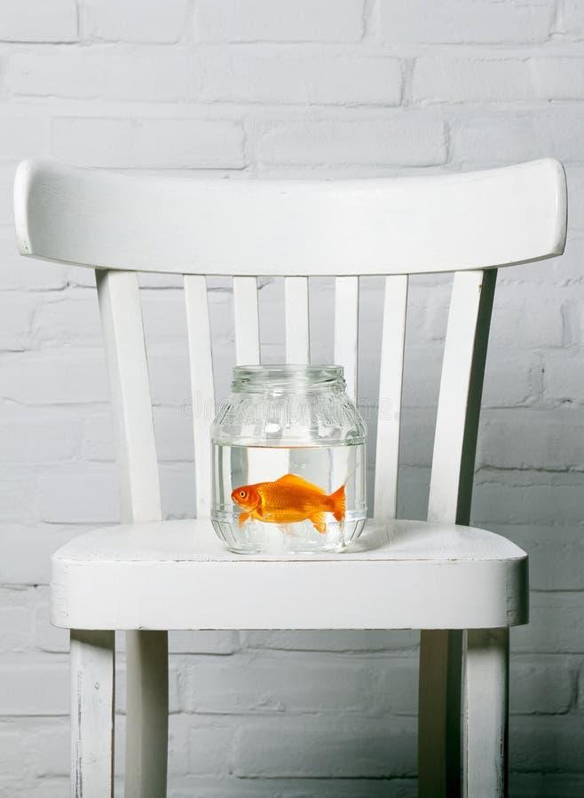 Baquet clair avec le poisson rouge à l'intérieur photographie stock libre de droits