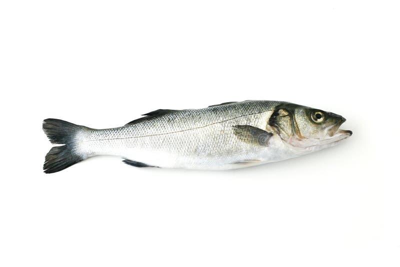 Bar d'Européen de poissons frais images libres de droits
