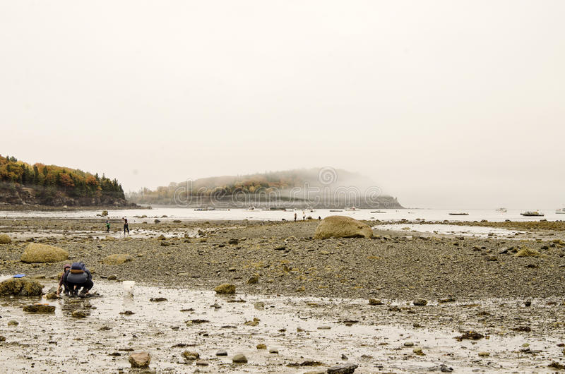 Bar Island in Bar Harbor, Maine. Fog on natural land bridge sand bar at low tide that connects Bar Harbor, Maine and Bar Island in Acadia National Park at Autumn stock photo
